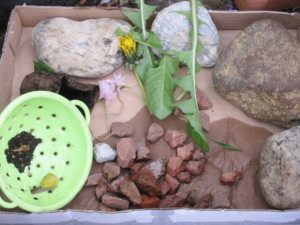Some time in the garden saw my little girl create a new home for her friend the snail