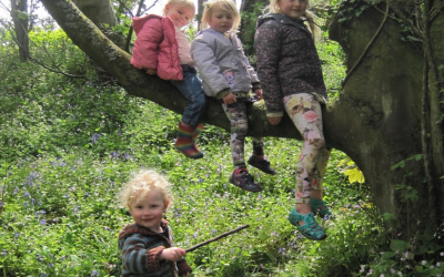 Building A Family Forest School